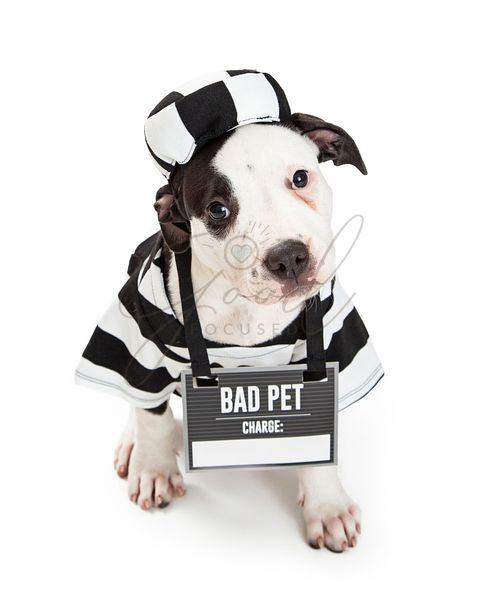 Bad Dog Wearing Criminal Halloween Costume