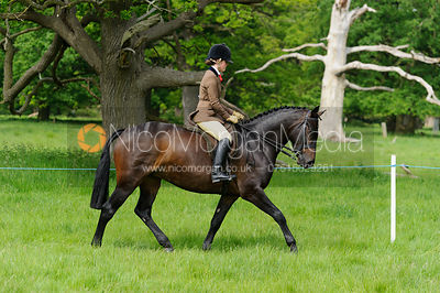 Class 44 - BSPS RIHS Pony of Show Hunter Type >143cms <=153cms photos