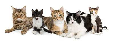Group of Cats Horizontal Web Banner