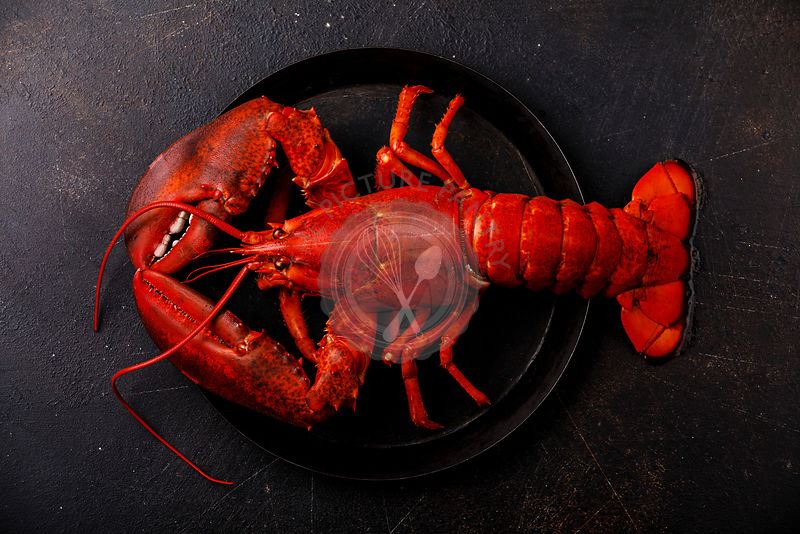 Boiled red Lobster on plate on black background