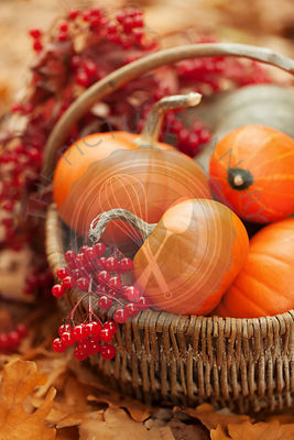Small pumpkins and ashberries in a basket