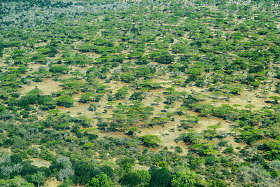 African Bush Forest on the Selous Plain Tanzania Africa