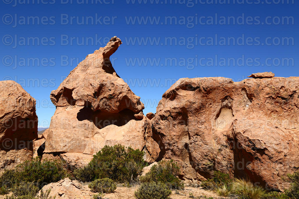 Frog / toad shaped eroded volcanic rock formation, Nor Lípez Province, Bolivia