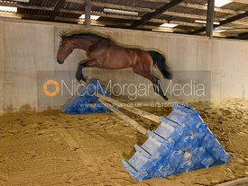 Loose jumping horse