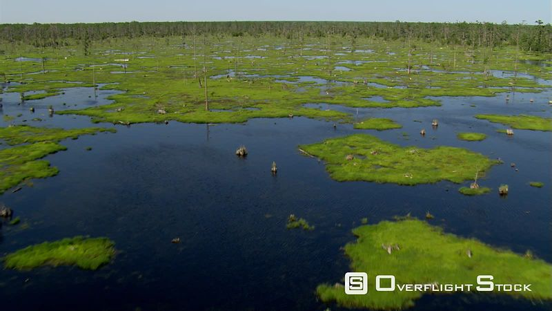 Low flight over green hummocks and drowned trees in a Louisiana swamp