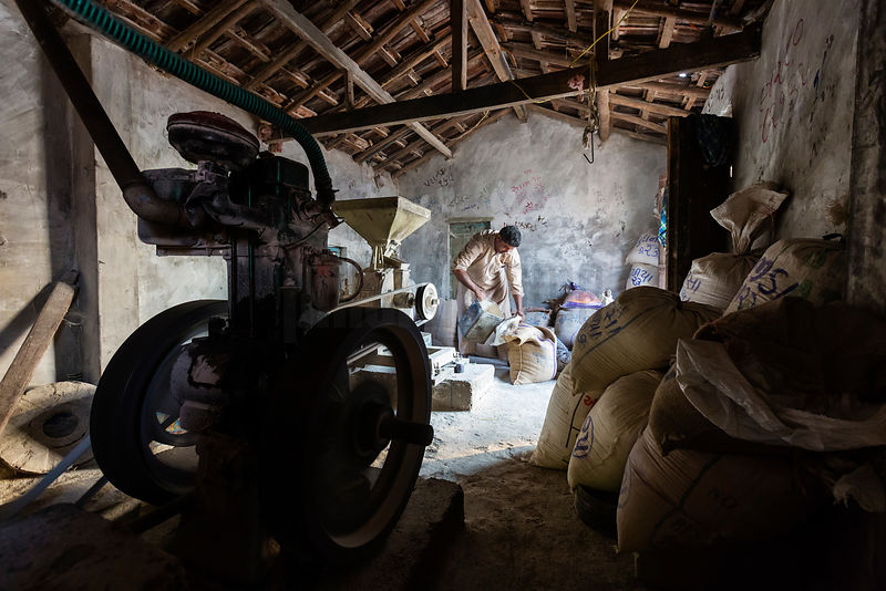 Man Grinding Millet to Make Flour for Chapatis