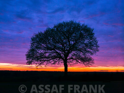 Silhouette of a tree against coloured skies