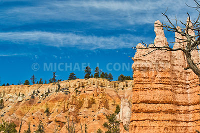 Trees at Top of Canyon- Bryce Canyon, Utah