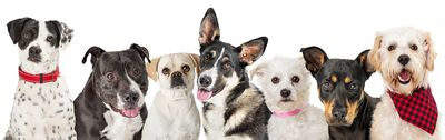Web Banner Row of Different Dogs