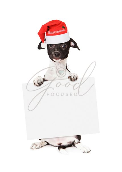 Holiday Puppy Wearing Santa Hat Holding Blank Sign