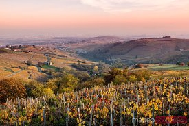 Autumn vineyards, Beaujolais region, Rhone Alpes, France