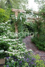fotoflor, toutes les photos et images de plantes, fleurs, jardins ...
