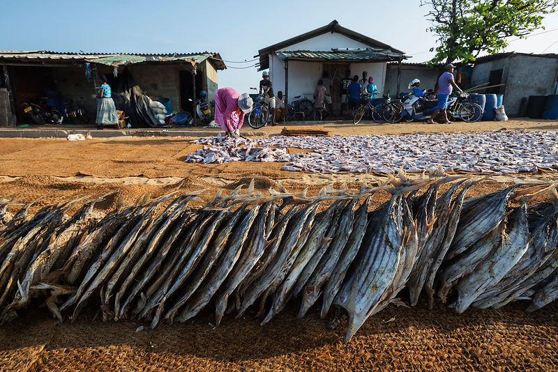 Fish Waiting to be Laid out to Dry
