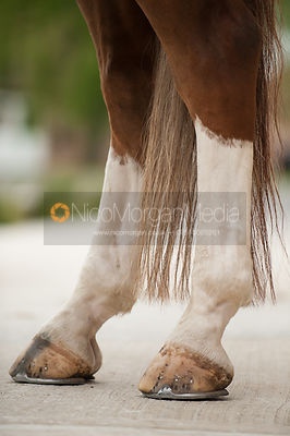 Horse anatomy Equestrian Stock Images