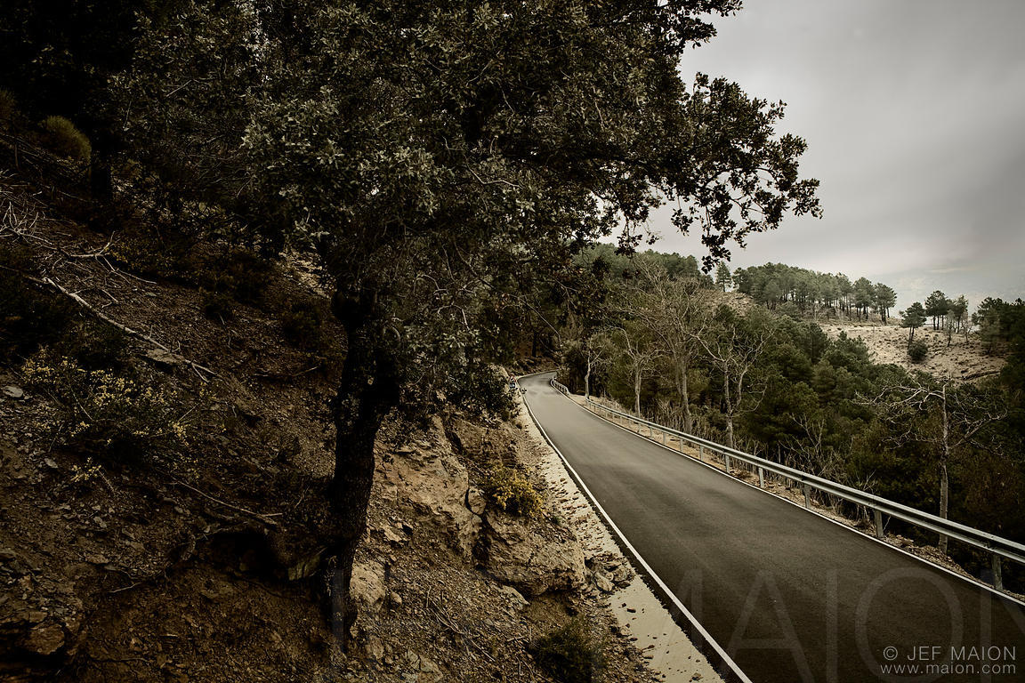 Olive tree and narrow mountain road