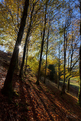 Autumn woods, Hafod