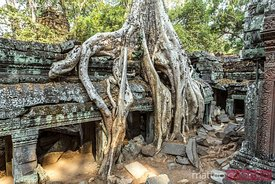 Old ruins in the forest, Angkor Wat, Cambodia