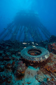 Salt Pier structure/pilings with discarded industrial tire underwater, Bonaire, Netherland Antillies