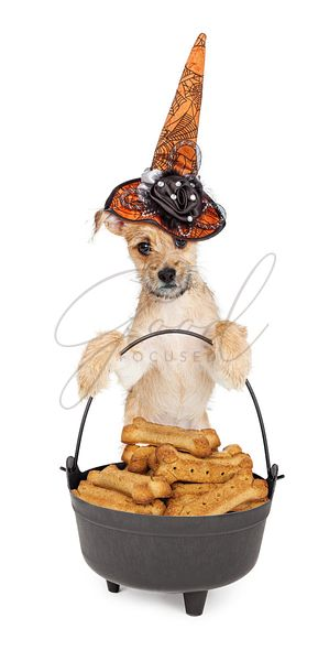 Cute Witch Dog With Pot of Treats