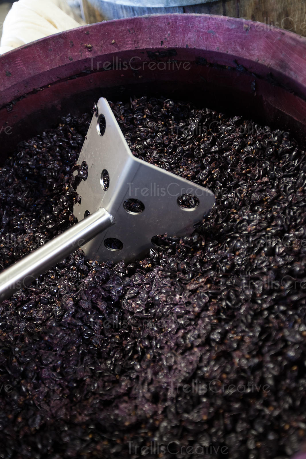 An open top barrel filled with fermenting cabernet sauvignon grapes being punched down