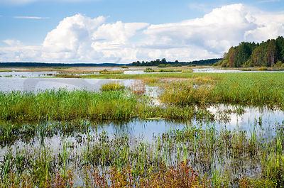 Lake Puurijärvi is one of the important bird habitats in Finland (FINNIBA).