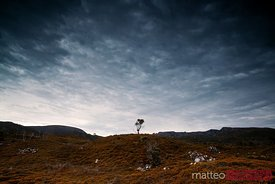 One tree on hill at sunrise Tasmania Australia