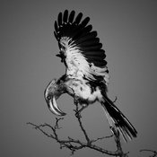 04000-Bird_Laurent_Baheux