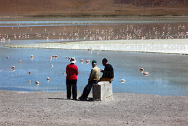 Tourists watching flamingos feeding at Laguna Hedionda , North Lipez region , Bolivia