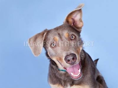 Studio portrait close up of happy dog