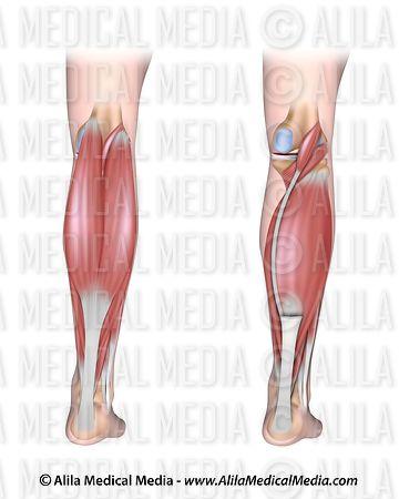 unlabeled leg diagram blank human leg diagram #7