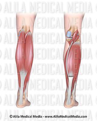 alila medical media | chiropractic images & videos twisted leg diagram unlabeled leg diagram