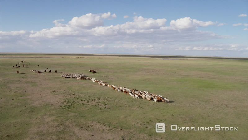 Livestock Grazing on the Grasslands of Mongolia