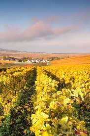 Vineyards in autumn, Champagne Ardenne, France