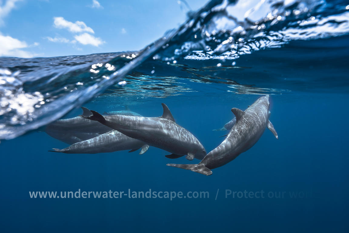 Daulphins underwater photography over the surface