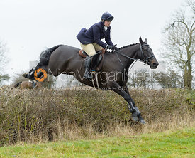 Kelly Morgan jumping a hedge by Puss's Bushes - The Cottesmore at The Fox and Hounds