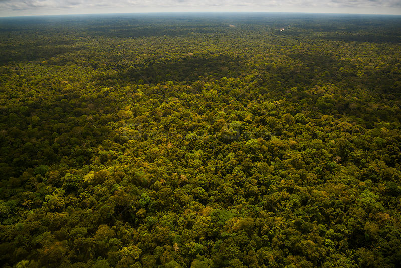 Primary Amazon Rainforest, Amazon Region, Peru, July 2015.