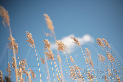 High grass and blue sky