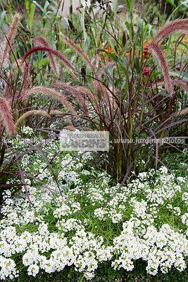 la phototh que les plus beaux jardins gramin es le plus grand choix de photos de jardin. Black Bedroom Furniture Sets. Home Design Ideas