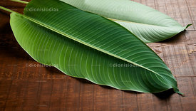 Large leaves isolated on wooden background