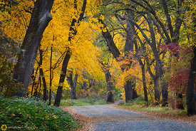 Fall Colors in Bidwell Park, Chico #22
