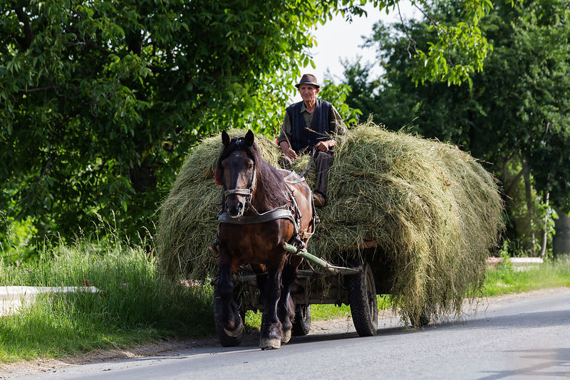 Farmer Transporting Cut Hay with a Horse-drawn Wagon