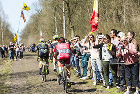 Group of Three Cyclists in the Forest of Arenberg- Paris Roubaix 2015