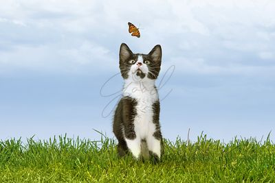 Cute Kitten Watching Butterfly