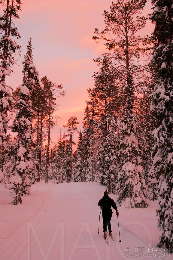 Cross-country skiing in winter forest