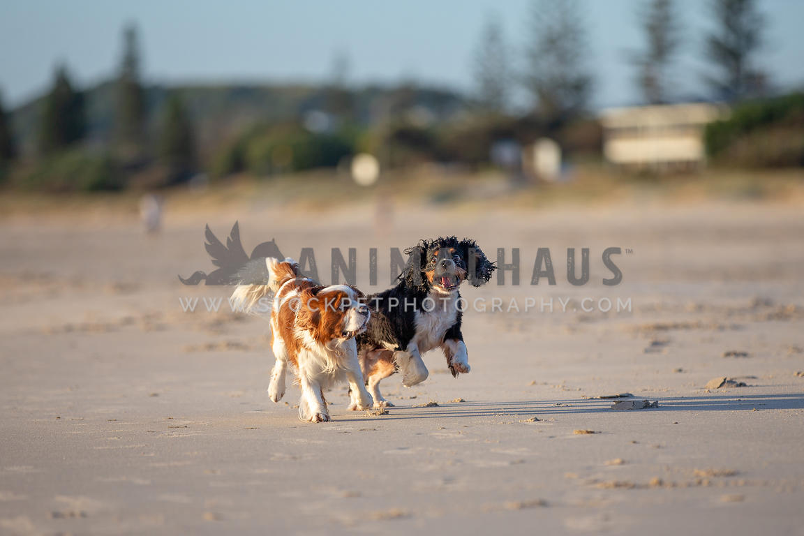 two dogs playing on the beach with funny expressions
