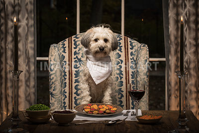 Small white shaggy dog at formal dining table
