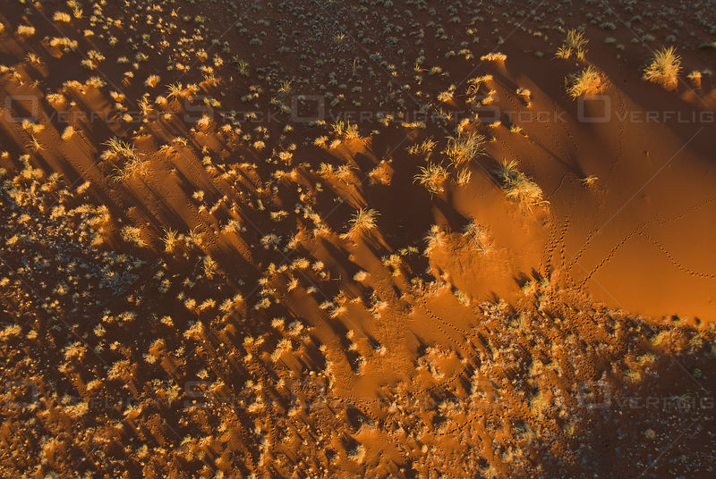 Aerial view of sand dunes and animal tracks in the Namib Desert, Nambia, southern Africa