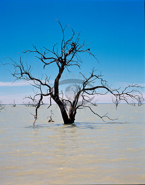 Lake Menindee Photos