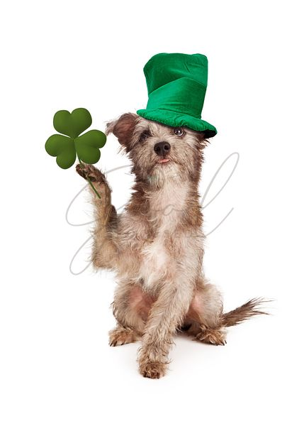 Dog With Clover and Green Hat