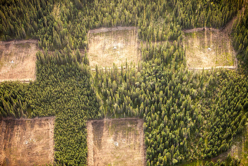 Boreal forest trees clear felled to make way for a new tar sands mine north of Fort McMurray, Alberta, Canada. The tar sands are responsible for the second fastest rate of deforestation on the planet.  August 2012